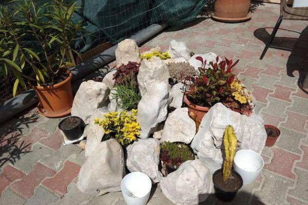 tulipan-kert-10364A946D0-9458-038B-CBCF-51548A4BE77A.jpg