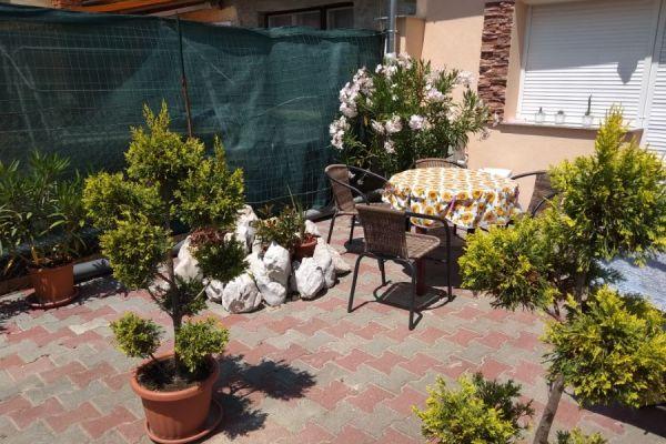 tulipan-kert-1066214095E-62F8-2E5D-05BA-657DA033B2DA.jpg